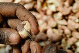 anatrans | cashews | deep graphic design